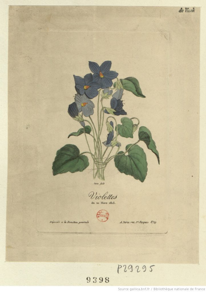 Napoleon violet symbol